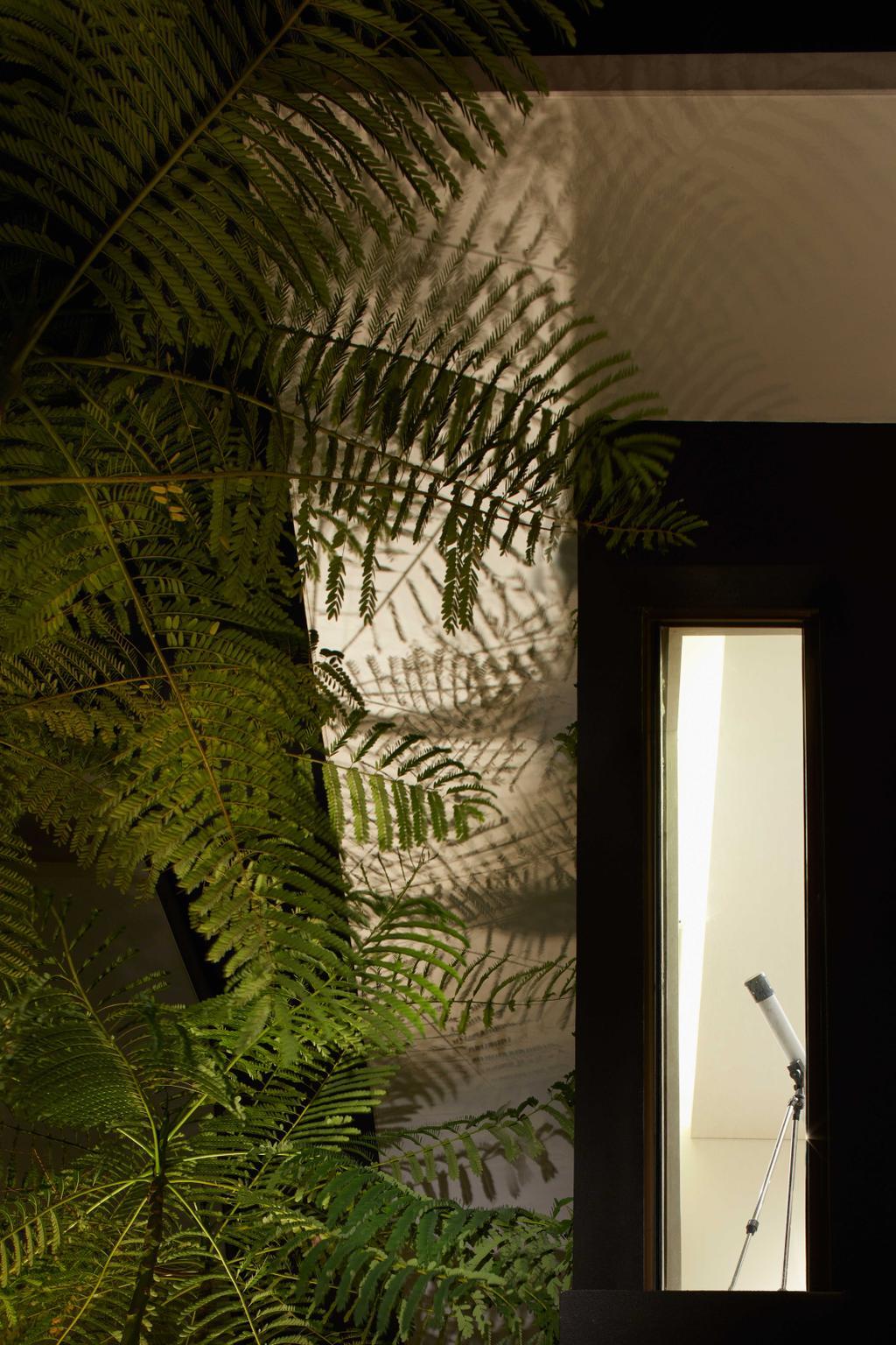 Modern, Landed, Garden, Jalan Jambu, Architect, asolidplan, Fern, Flora, Plant