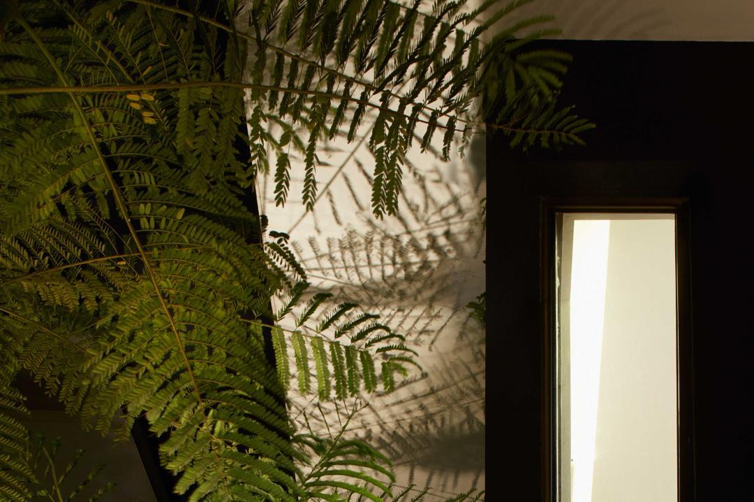 Jalan Jambu, asolidplan, Modern, Garden, Landed, Fern, Flora, Plant