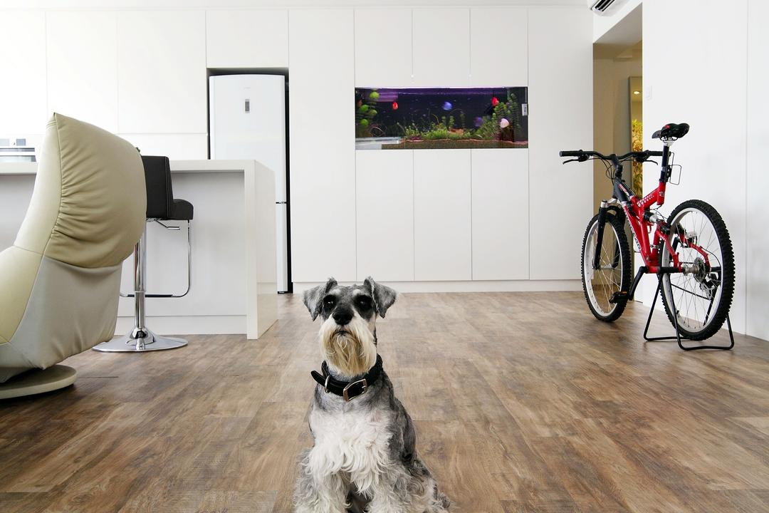 Telok Blangah, Free Space Intent, Modern, Living Room, HDB, Laminate, Parquet Flooring, Wooden Floor, Chair, Furniture, Bicycle, Bike, Transportation, Vehicle, Mountain Bike, Animal, Canine, Dog, Mammal, Pet, Terrier, White Board, Hardwood, Wood, Aquarium, Sea Life, Water, Boston Bull, Bulldog