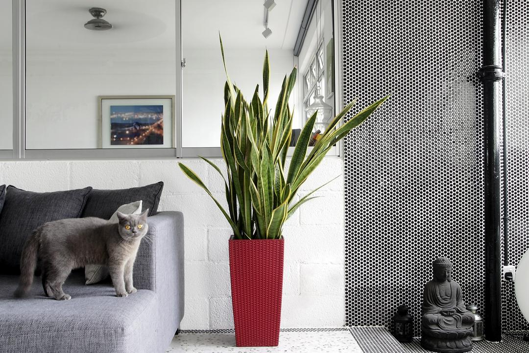 Ang Mo Kio, Free Space Intent, Eclectic, Living Room, HDB, White Ceiling, Spotted Floor, Grey Sofa, Gray Sofa, Art, Buddha, Worship, Flora, Jar, Plant, Potted Plant, Pottery, Vase, Abyssinian, Animal, Cat, Mammal, Pet