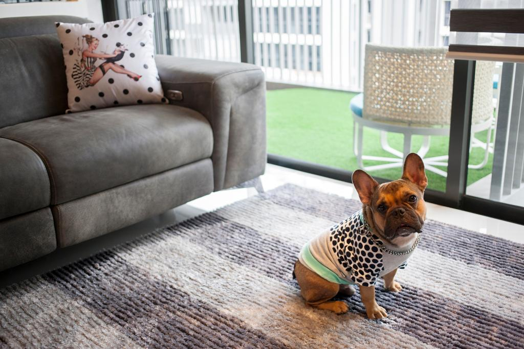 Eclectic, Condo, Living Room, Twin Waterfalls, Interior Designer, Ascenders Design Studio, Couch, Furniture, Cushion, Home Decor, Animal, Canine, Chihuahua, Dog, Mammal, Pet