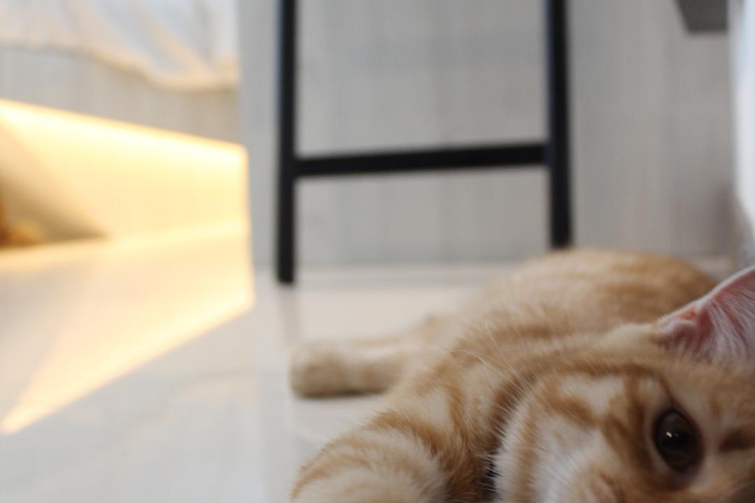 Upper Serangoon Crescent, The Local INN.terior 新家室, Minimalistic, Bedroom, HDB, Animal, Cat, Kitten, Mammal, Pet