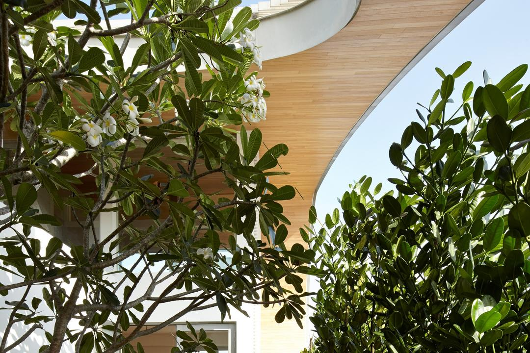 Cove Drive 2, Greg Shand Architects, Modern, Landed, Open Roof, Planted Trees, Wooden Ceiling, Flora, Jar, Plant, Potted Plant, Pottery, Vase, Herbs, Parsley, Planter