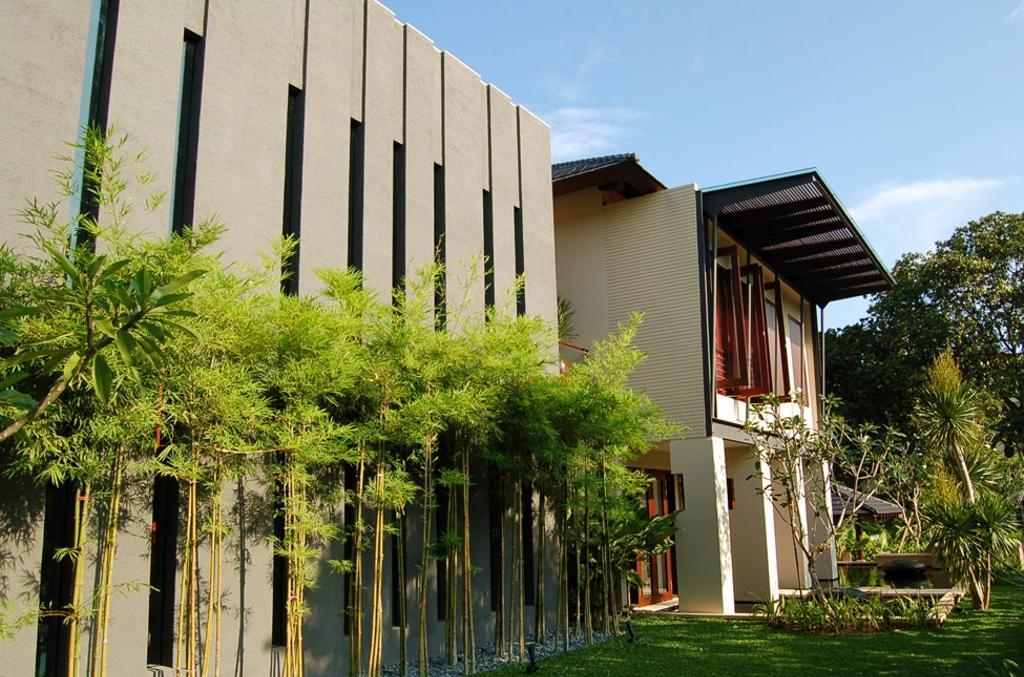 Contemporary, Landed, Mount Echo Park, Architect, Timur Designs, Bamboo, Flora, Plant, Jar, Potted Plant, Pottery, Vase, Art, Blossom, Flower, Flower Arrangement, Ikebana, Ornament