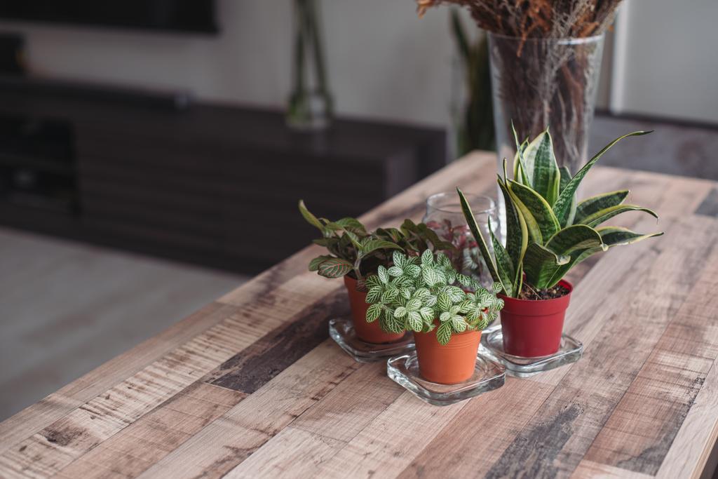 Modern, HDB, Living Room, Clementi Street 13, Interior Designer, Urban Habitat Design, Aloe, Flora, Plant, Jar, Planter, Potted Plant, Pottery, Vase, Pot