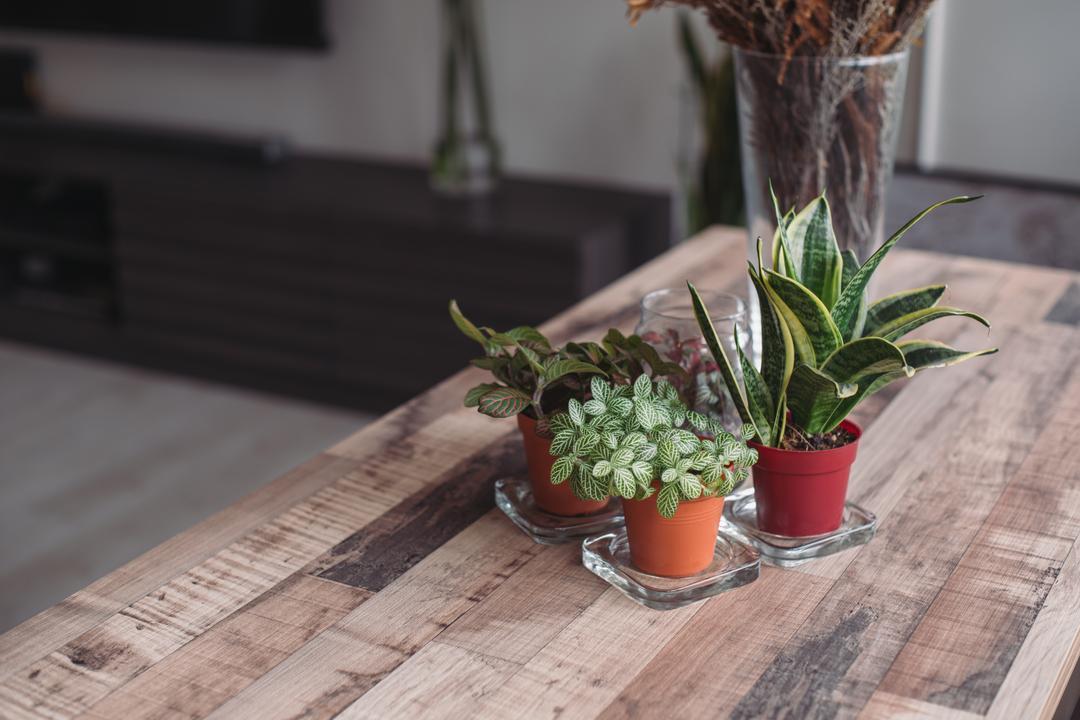 Clementi Street 13, Urban Habitat Design, Modern, Living Room, HDB, Aloe, Flora, Plant, Jar, Planter, Potted Plant, Pottery, Vase, Pot
