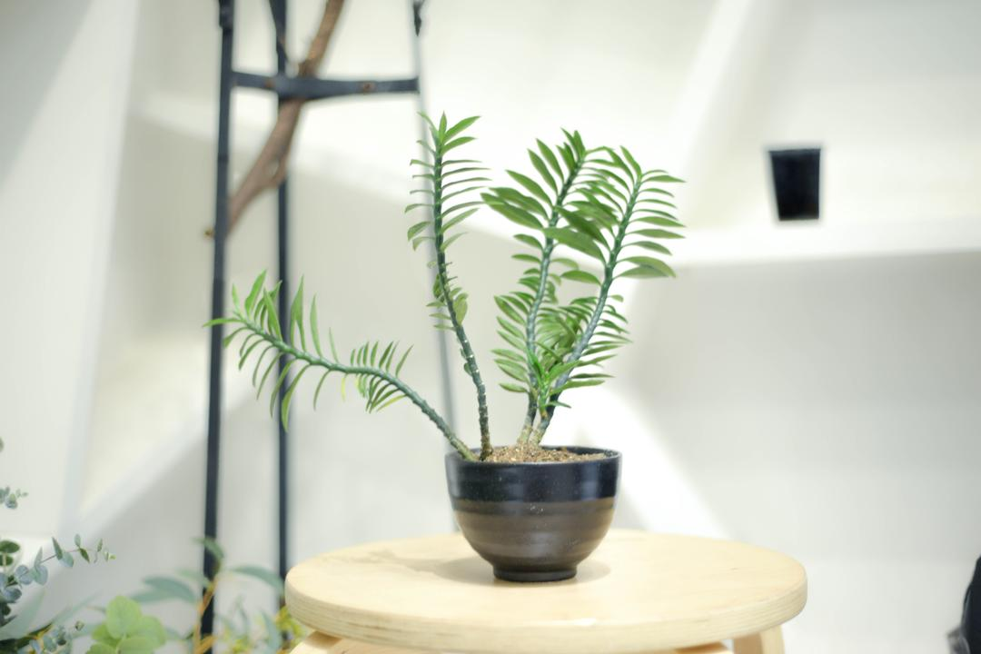 Help! My House... Plants Are Dying