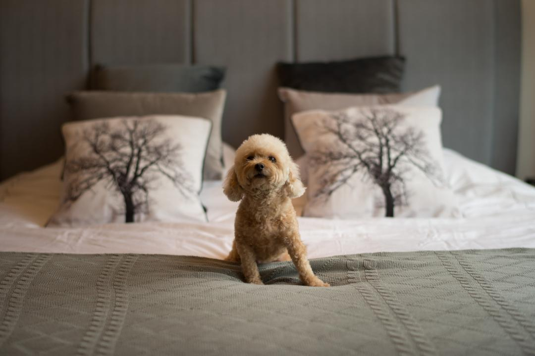 Sea Horizon, Mr Shopper Studio, Scandinavian, Bedroom, Condo, Animal, Canine, Dog, Mammal, Pet, Poodle