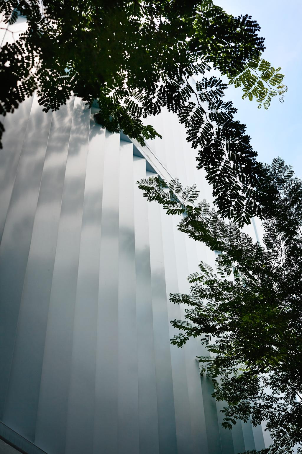 Contemporary, Landed, Primose Avenue, Architect, HYLA Architects, Fern, Flora, Plant, Abies, Conifer, Fir, Tree