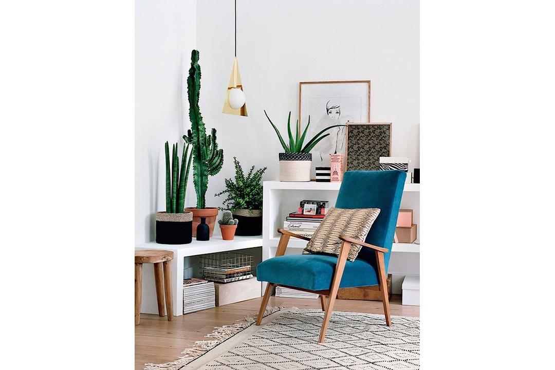 Plants-Interior-Living-Room