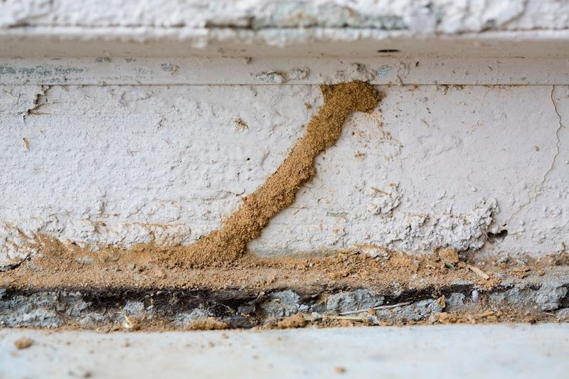 Get Rid of Pests at Home