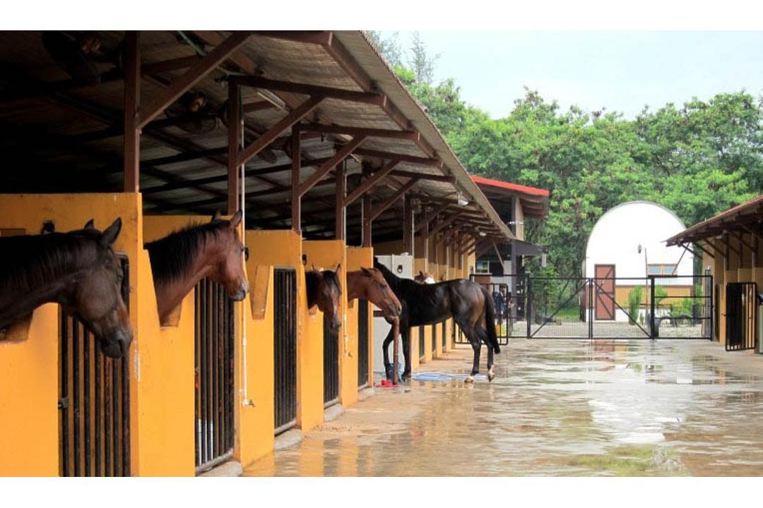 punggol-gallops-stable
