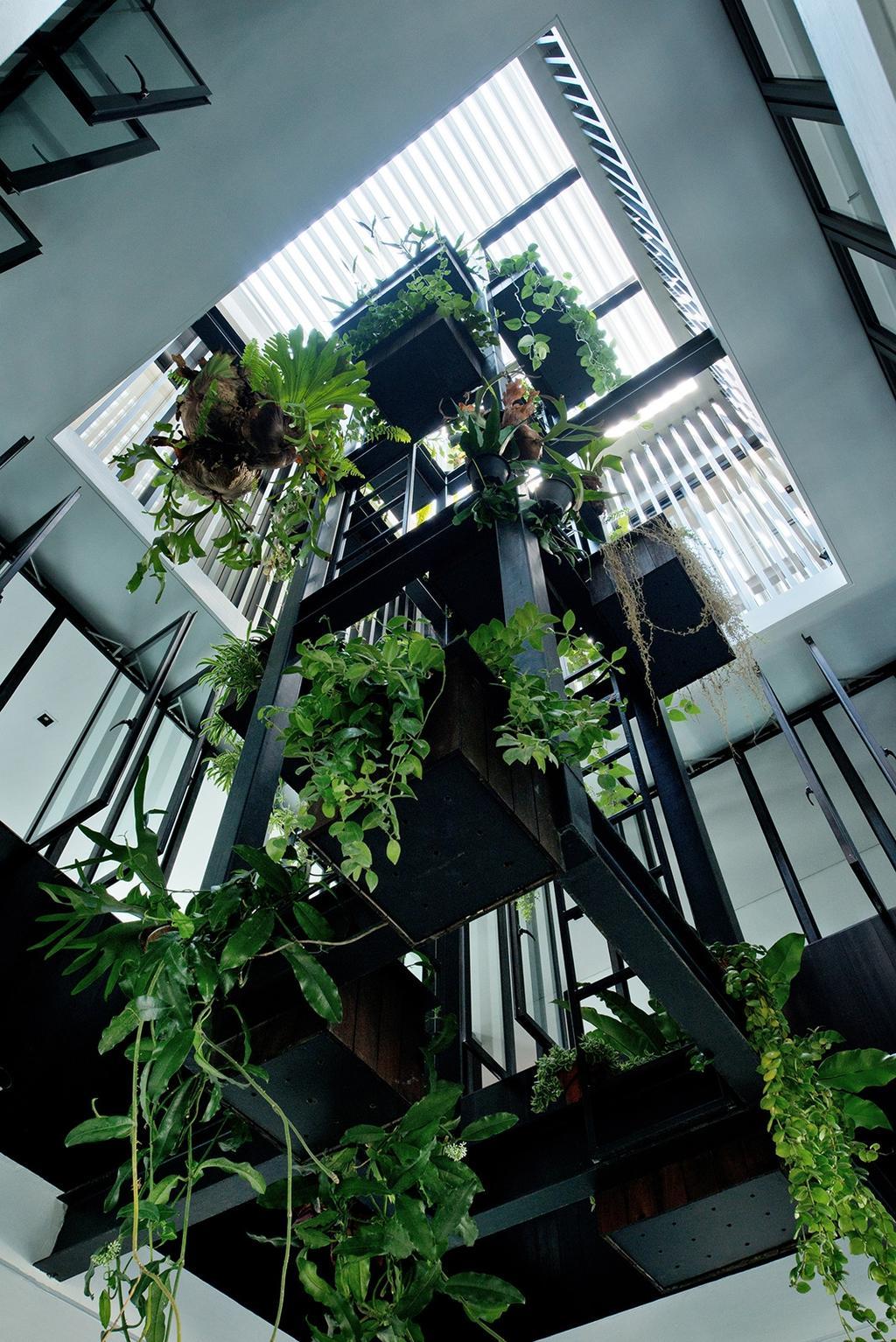 Modern, Landed, Tosca Street, Architect, Kite Studio Architecture, Plants, Lift, Windows, Flora, Jar, Plant, Potted Plant, Pottery, Vase, Vine, Ivy