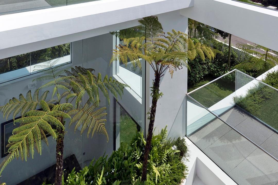 Tosca Street, Kite Studio Architecture, Modern, Balcony, Landed, Plants, Flora, Jar, Plant, Potted Plant, Pottery, Vase, Fern