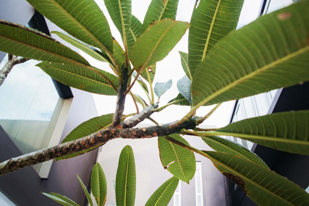 Haven @ Kulai, Code Red Studio, Modern, Landed, Flora, Leaf, Plant