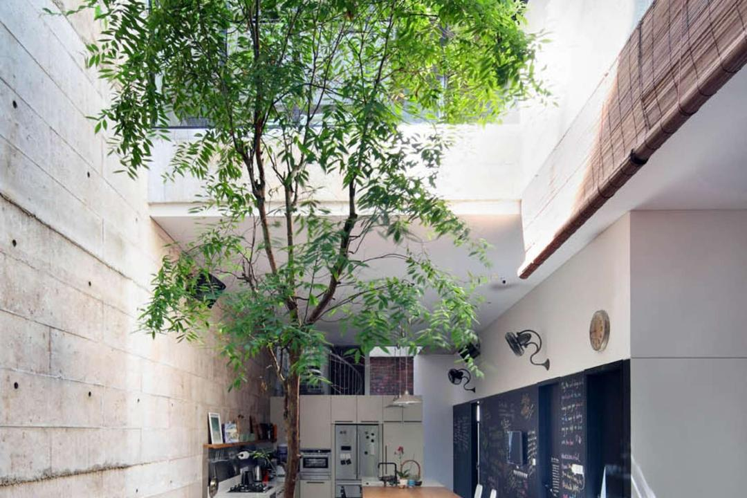 Neil Road Shophouse, The Design Abode, Traditional, Garden, Landed, Plants, Trees, Bright, Natural Lighting, Dill, Flora, Food, Plant, Seasoning