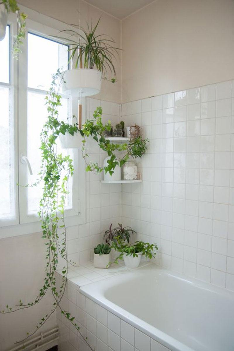 Wabi Sabi Bathrooms, Indoor Air Purifying Plants