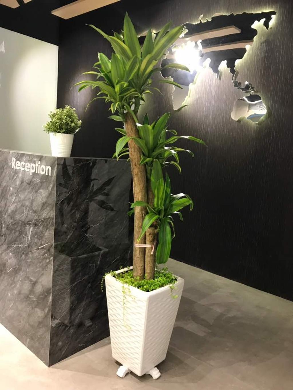 We Pays Office, Mahkota Parade, Commercial, Interior Designer, Trivia Group Sdn. Bhd., Modern, Contemporary, Flora, Jar, Plant, Potted Plant, Pottery, Vase, Planter, Bonsai, Tree