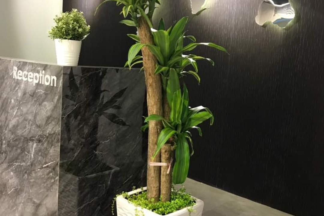 We Pays Office, Mahkota Parade, Trivia Group Sdn. Bhd., Modern, Contemporary, Commercial, Flora, Jar, Plant, Potted Plant, Pottery, Vase, Planter, Bonsai, Tree