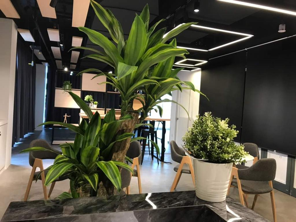 We Pays Office, Mahkota Parade, Commercial, Interior Designer, Trivia Group Sdn. Bhd., Modern, Contemporary, Flora, Jar, Plant, Potted Plant, Pottery, Vase
