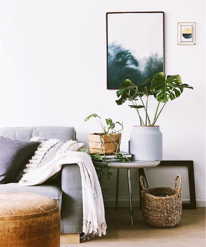 Caring for houseplants guide