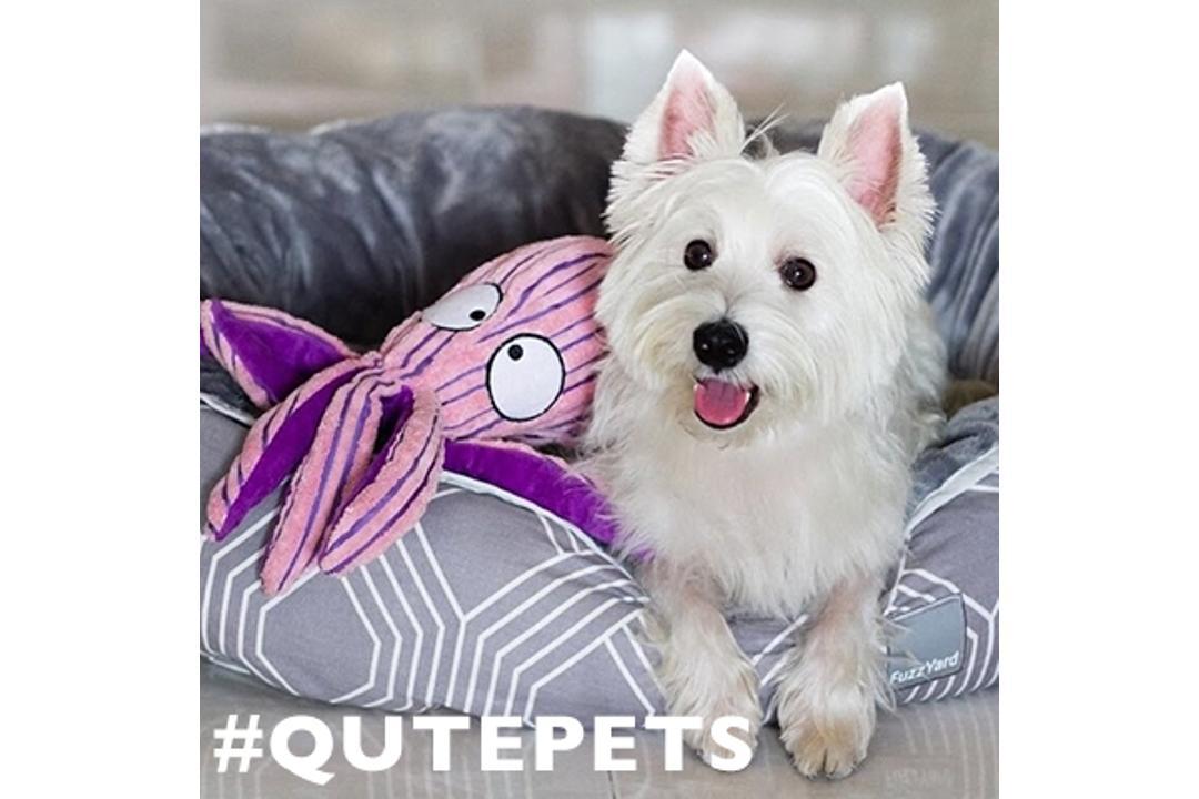 Let Your Pets Shine: Qutepets Instagram Contest