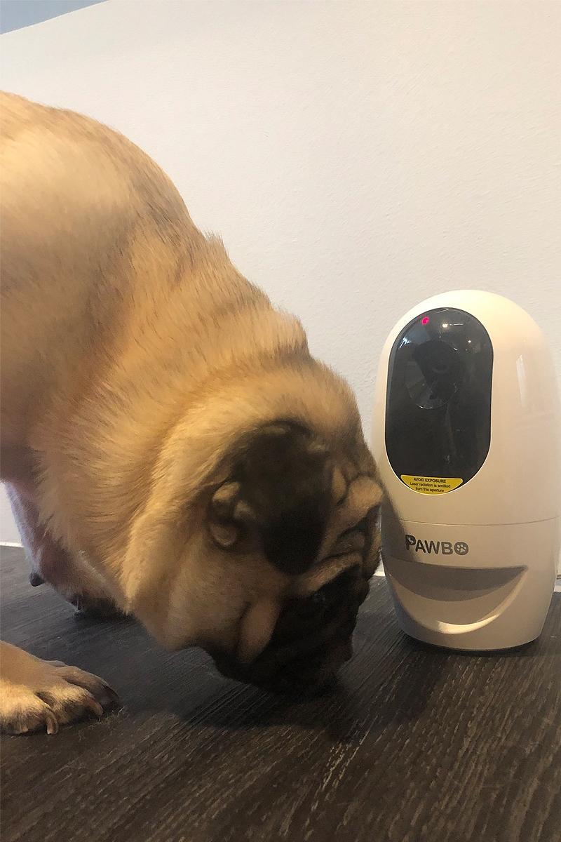 pet cameras for the home