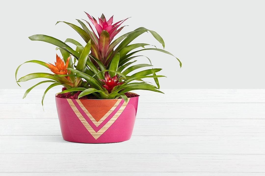 House Plant Home Decoration