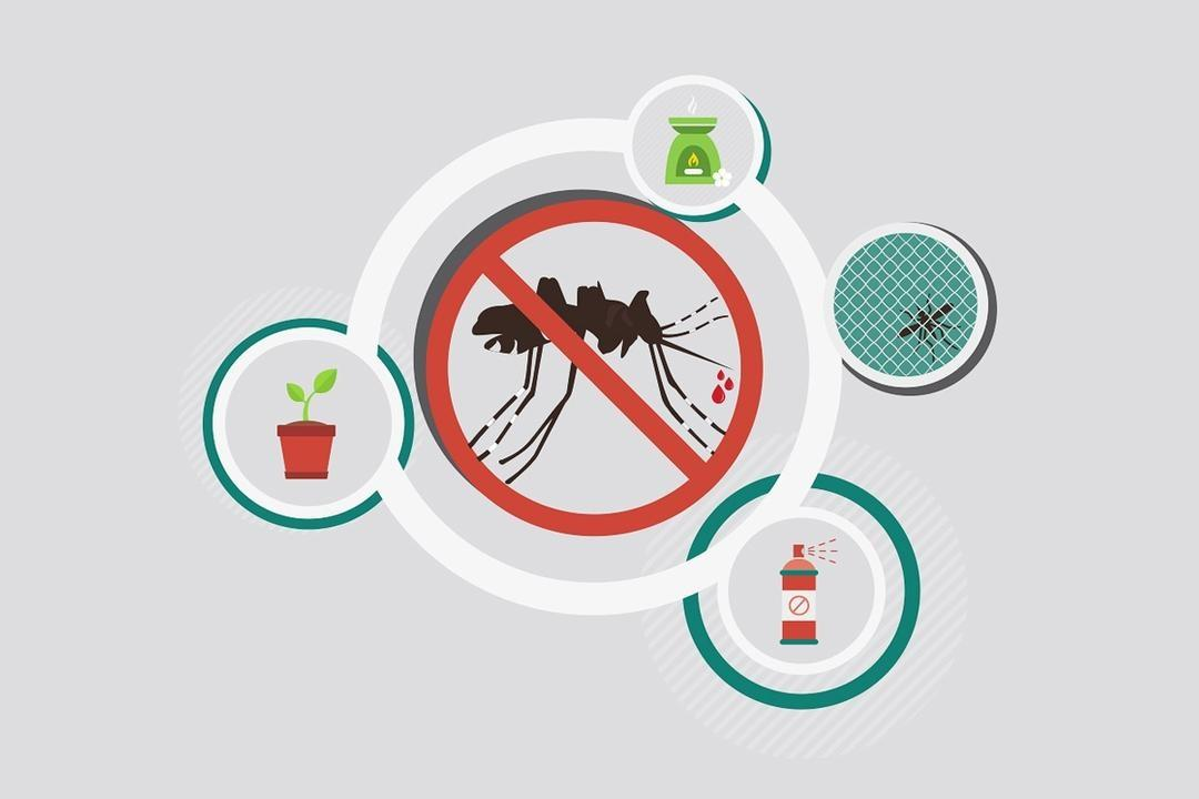 Dengue On the Rise — Keep Your Home Mozzie-Free in 10 Minutes 5
