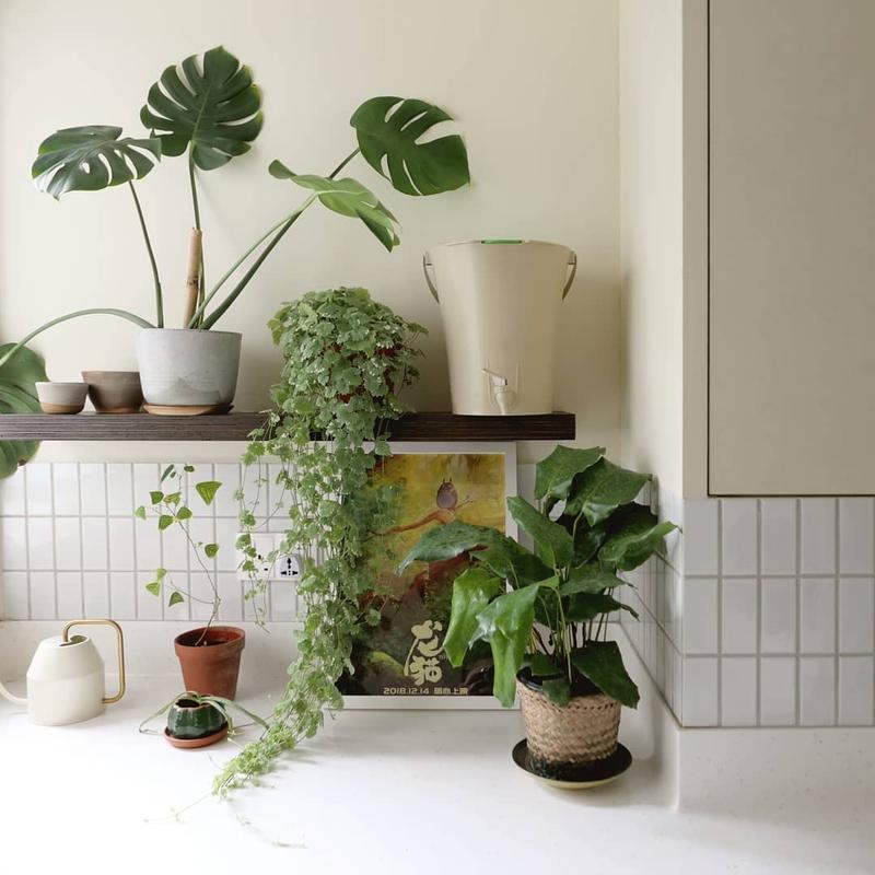 design environmentally-friendly eco-friendly green home
