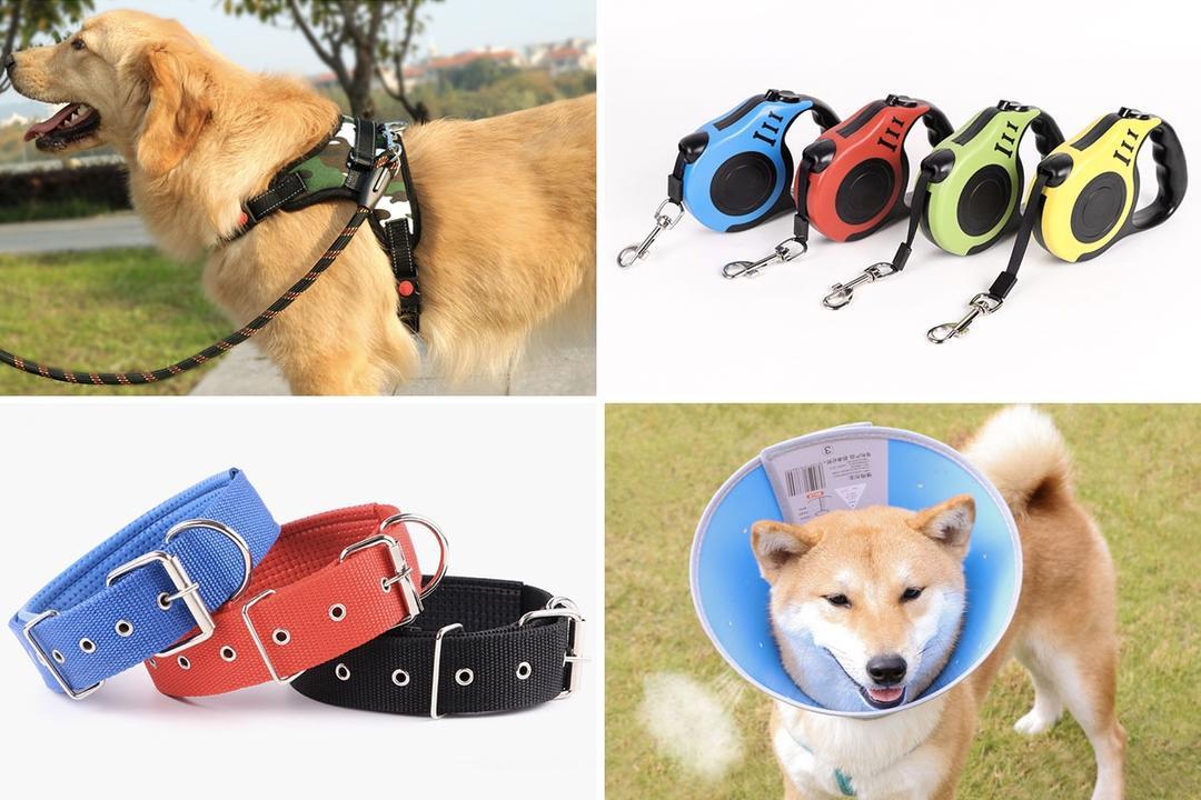 taobao dog leash cones