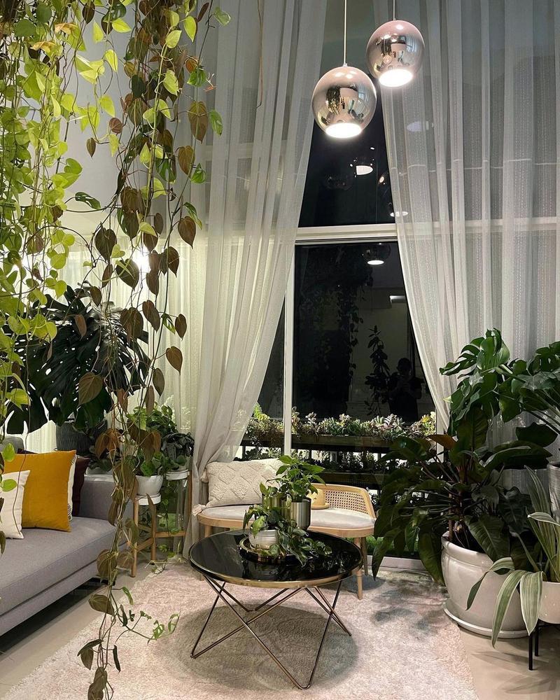 indoor plants home renovation