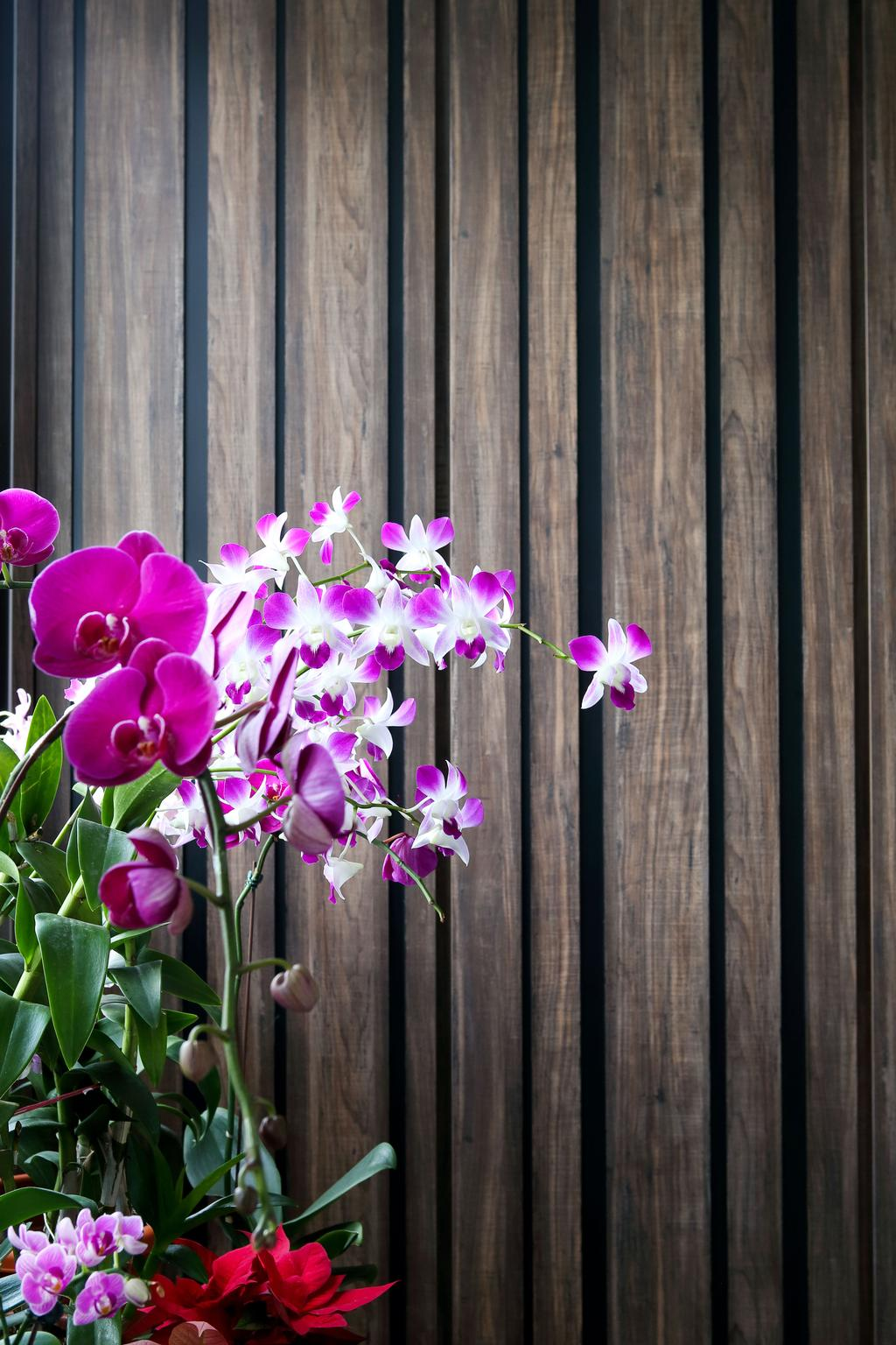 Eclectic, HDB, Living Room, Woodlands (Block 847), Interior Designer, The Scientist, Contemporary, Potted Plant, Flowers, , Greeneries, Blossom, Flora, Flower, Orchid, Plant, Gladiolus