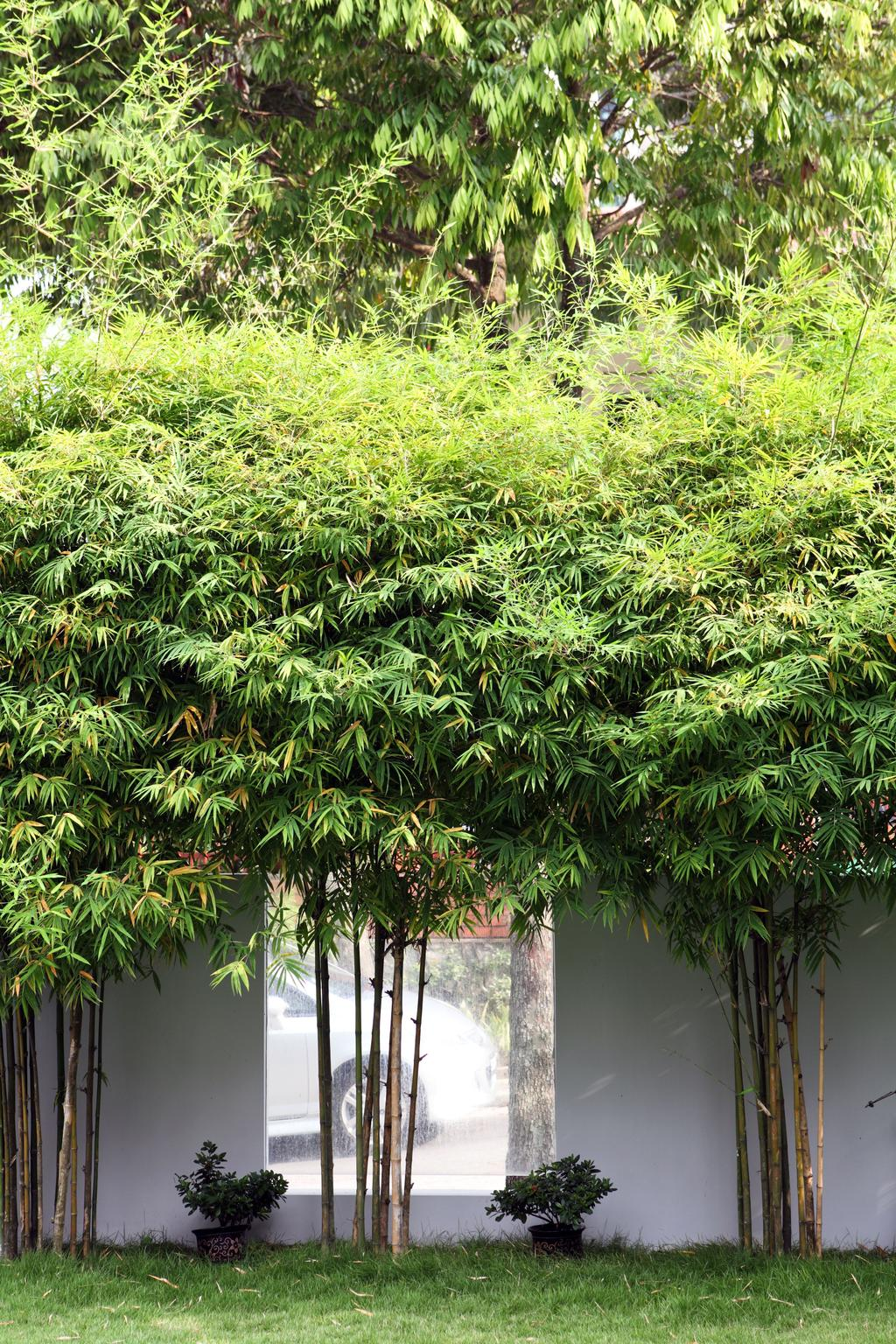 Contemporary, Landed, Garden, Chu Lin Road, Interior Designer, The Scientist, Natural Privacy, Plants, Compound, Conifer, Flora, Plant, Tree, Yew, Arecaceae, Palm Tree